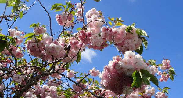 Blossom-sm